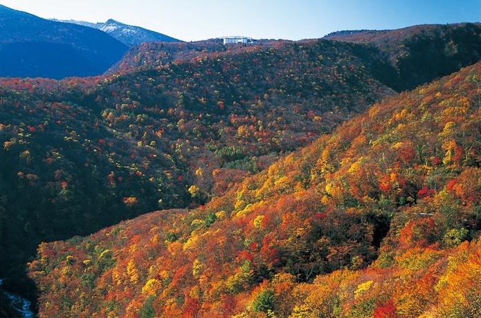 蔵王の紅葉の画像