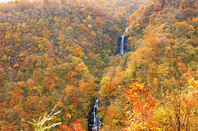 蔵王の紅葉の三連の滝の画像