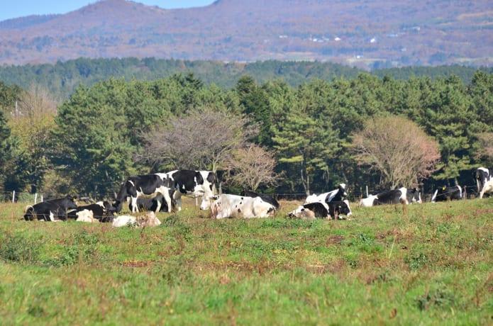 蔵王酪農センターの画像