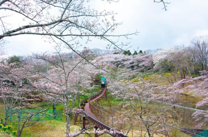 船岡城阯公園の桜