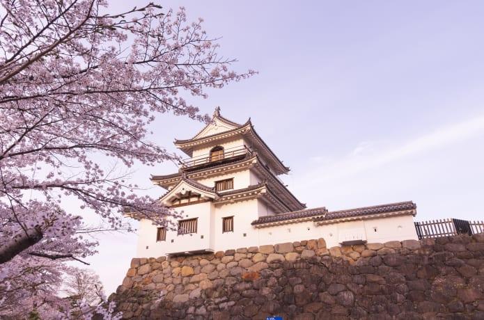 白石城(益岡公園)の桜