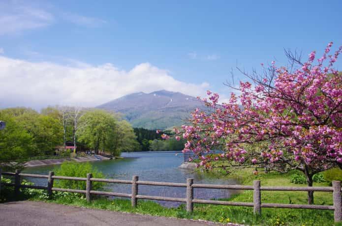 長老湖 桜