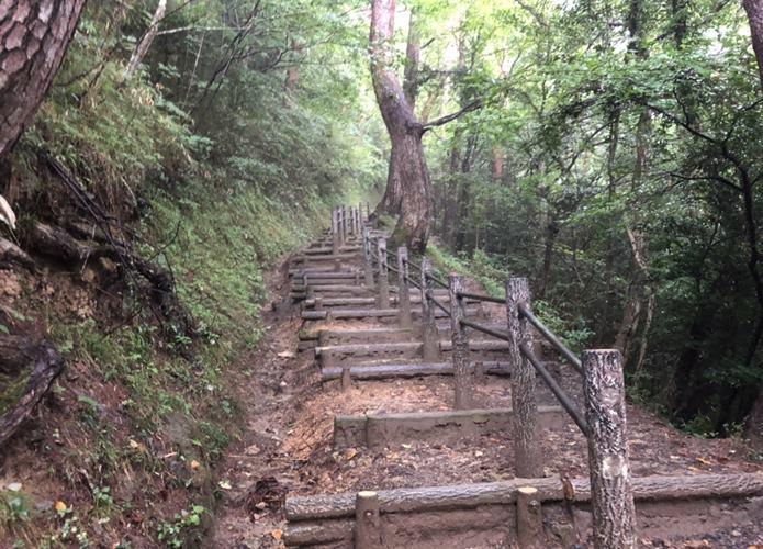 大高森 森と階段