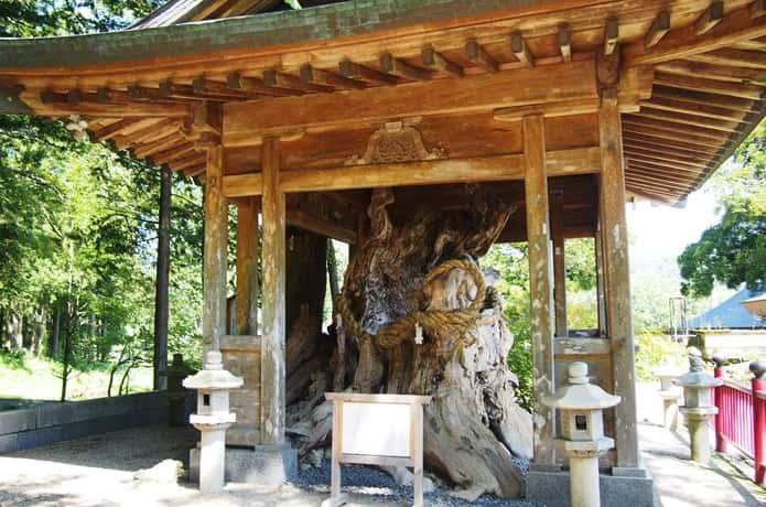 西方寺 縁結びのご神木