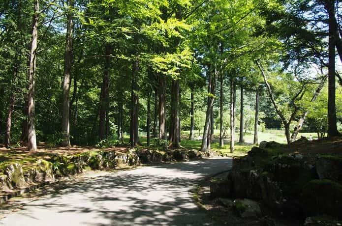 五重塔へと続く森の道