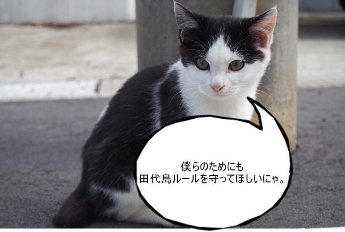 田代島 猫と触れ合うルール