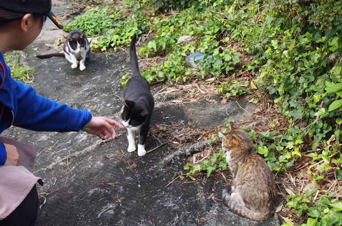 田代島 観光客と猫