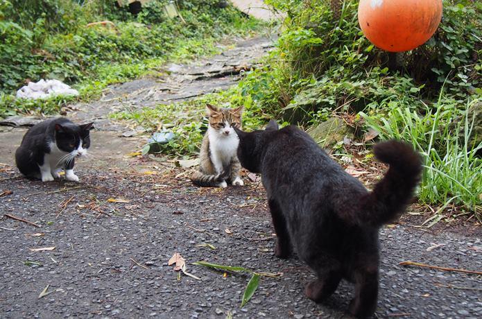 田代島 猫の集会