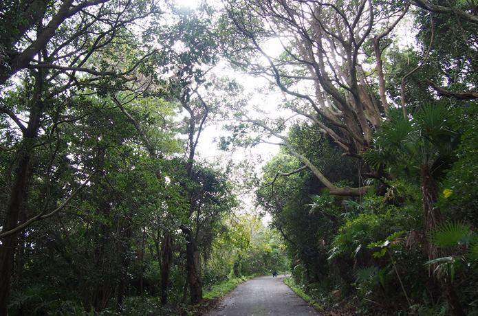 田代島の森の中