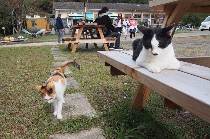 田代島 島の駅のベンチでくつろぐ猫
