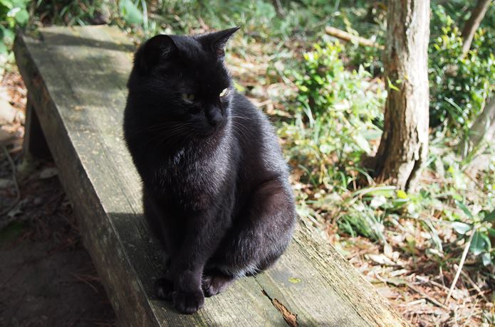 猫神様猫神社の前にいた猫