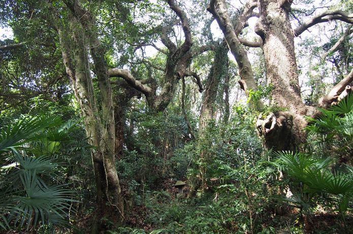 田代島 自然