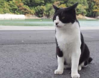 田代島の猫と港