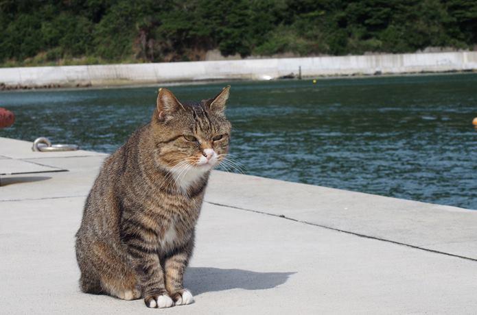 猫 大泊港