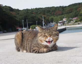田代島 威嚇する猫