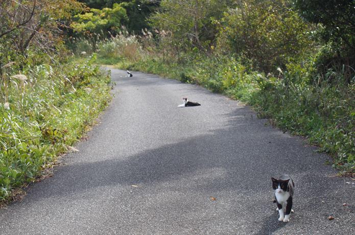 仁斗田港へ向かう道中の猫