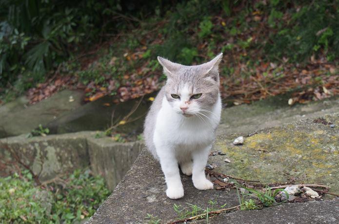 田代島 路地 猫