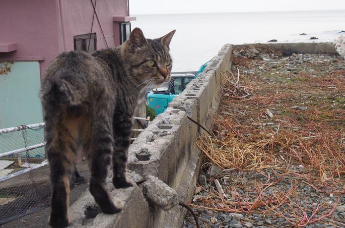 田代島のクロネコ堂前の猫