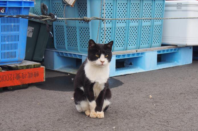 田代島の漁港と猫