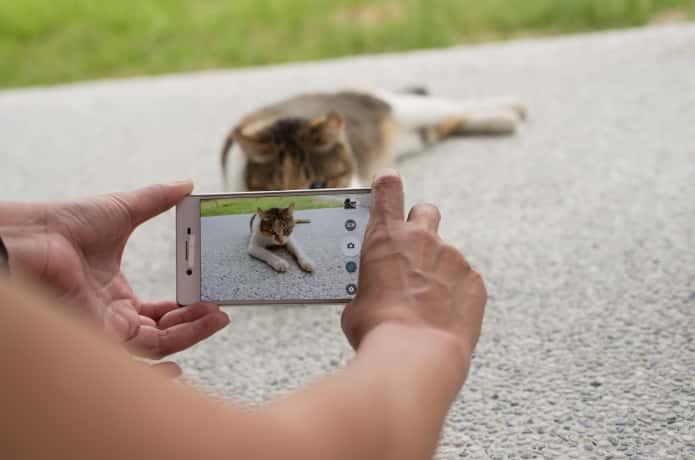 猫を撮影する人