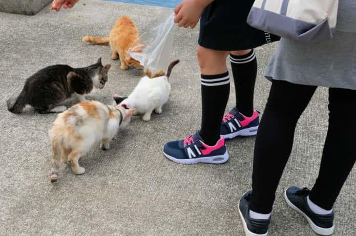 猫に餌を上げる人