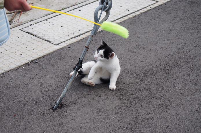 田代島 子猫