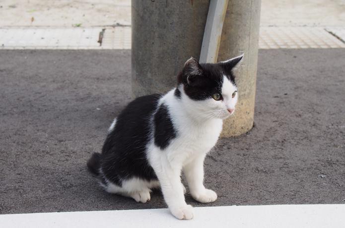田代島 歩道にいた猫