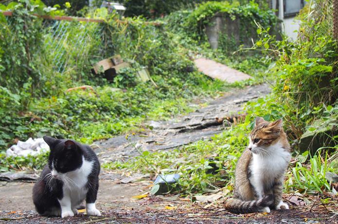 田代島 住宅の庭から出てきた猫