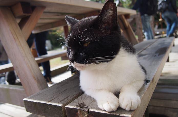 田代島 ベンチに座る猫