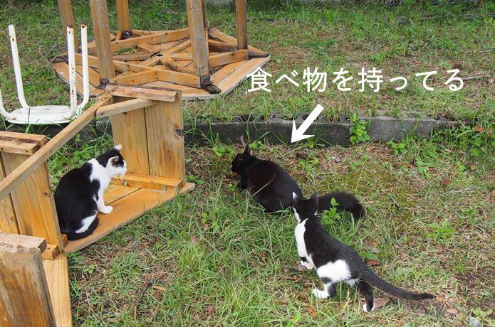 田代島 獲物を横取りしようと争う猫