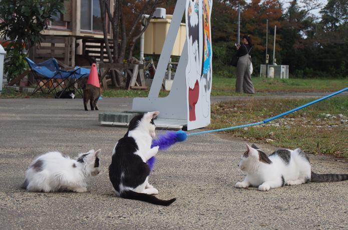 田代島 観光客の猫じゃらしでじゃれている猫