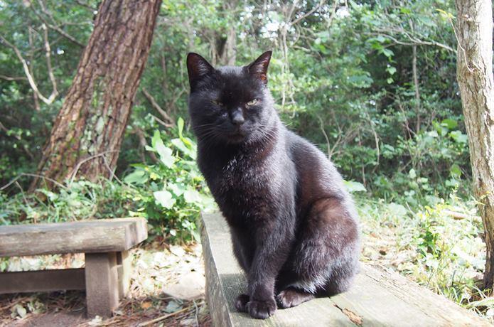 田代島 猫神社前のベンチに居座る猫