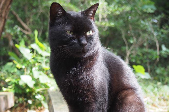 猫神様猫神社に居続ける黒猫