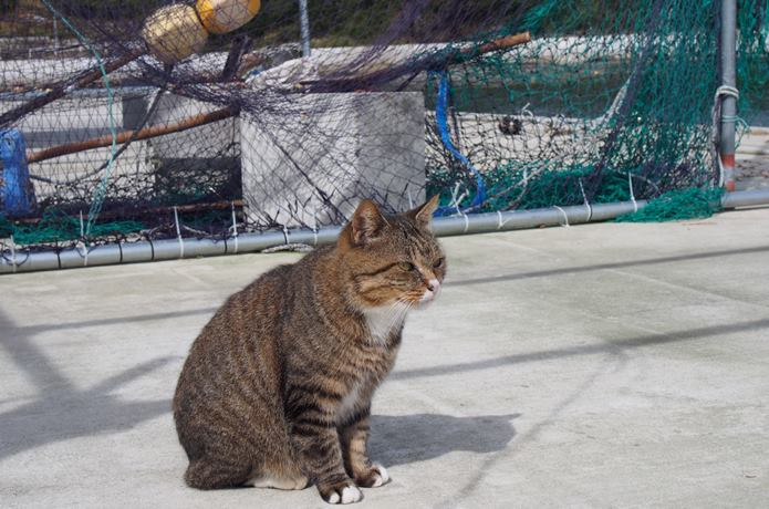 田代島 大泊港と猫