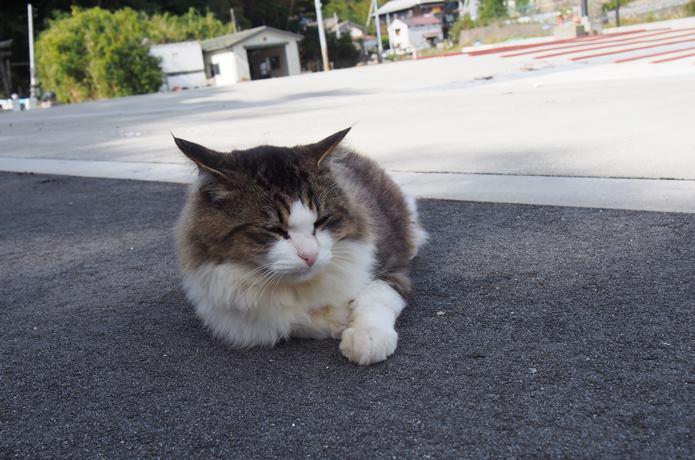 田代島 大泊港の日陰で涼む猫