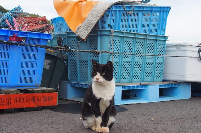 田代島 漁港の猫