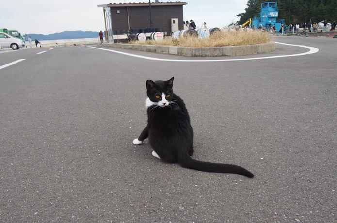 田代島 漁港にいた黒猫