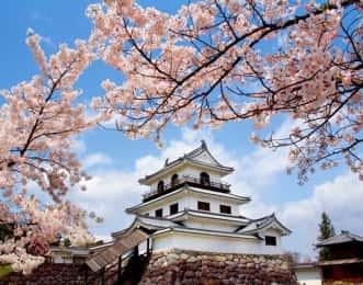 白石城 桜