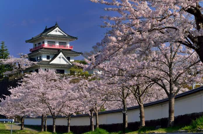 涌谷町 城山公園の桜