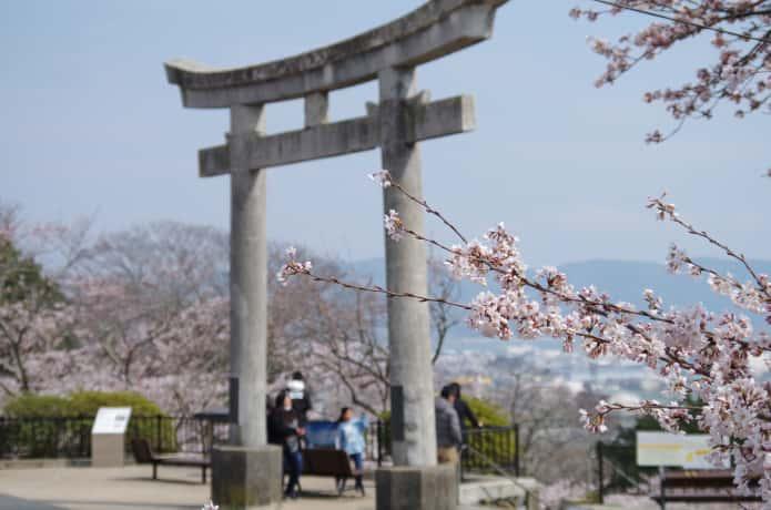 日和山公園の桜