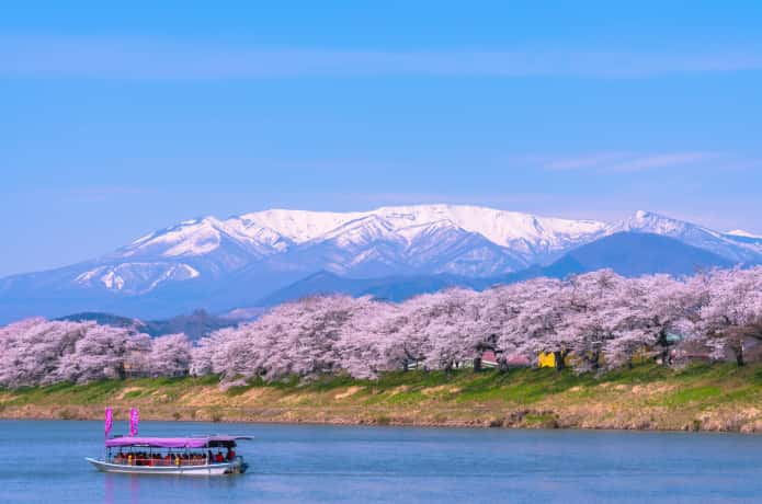 白石蔵王 桜