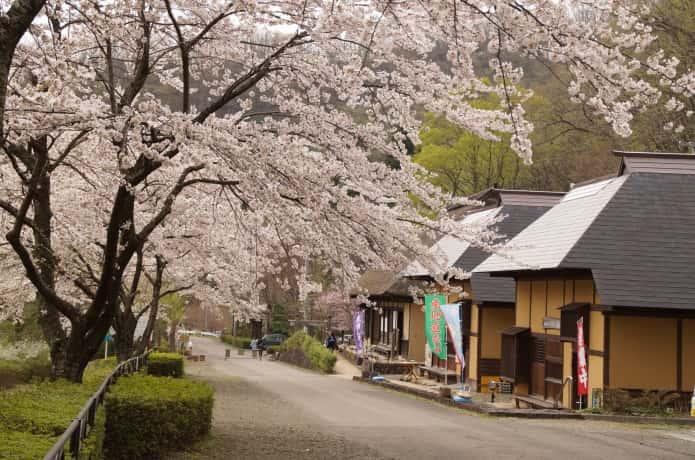 検断屋敷と桜