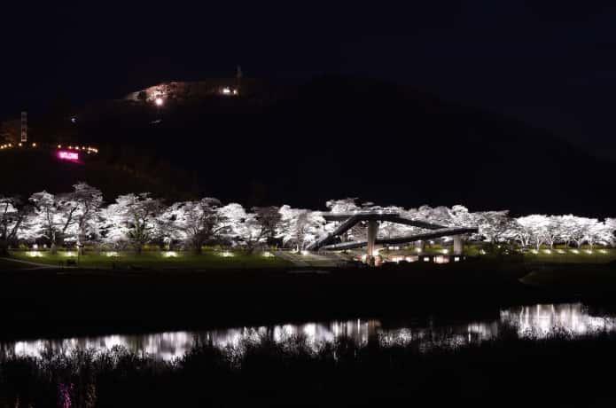 白石川一目惚れ千本桜