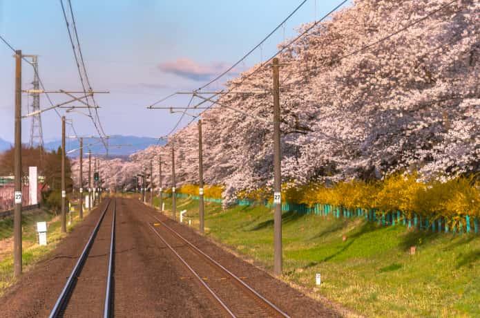 電車から見る白石川一目千本桜