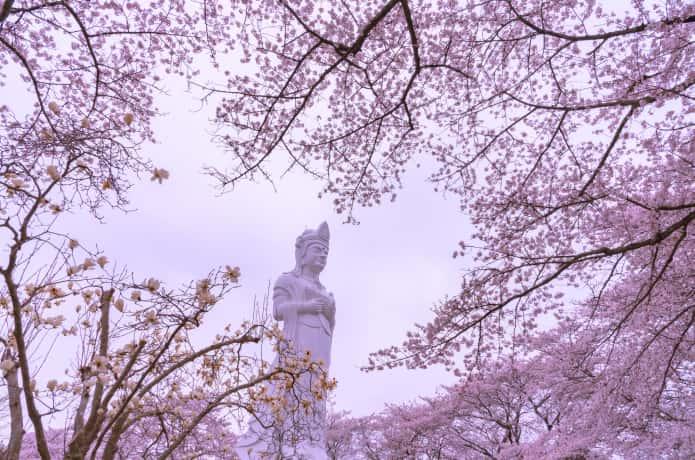 船岡城址公園 観音様と桜