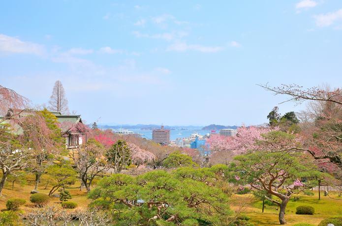 鹽竈神社からみた松島湾と桜