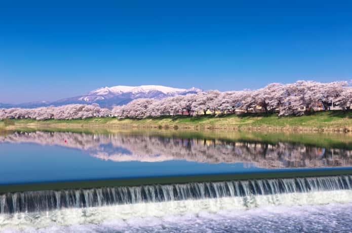 韮神堰からみる白石川堤千本桜