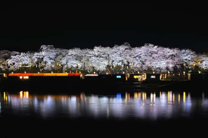 大河原町 千本桜 ライトアップ