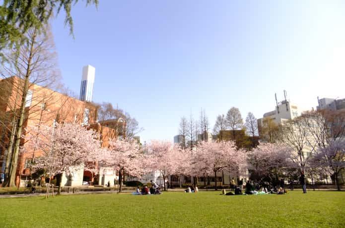 仙台 錦町公園の桜