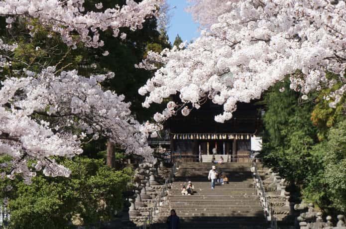 仙台 東照宮 桜